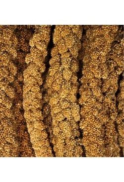 Kolbenhirse französisch gelb, 1 kg