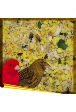 Complet Canary, 1 kg