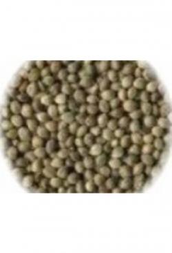 Hanfsaat, 1 kg
